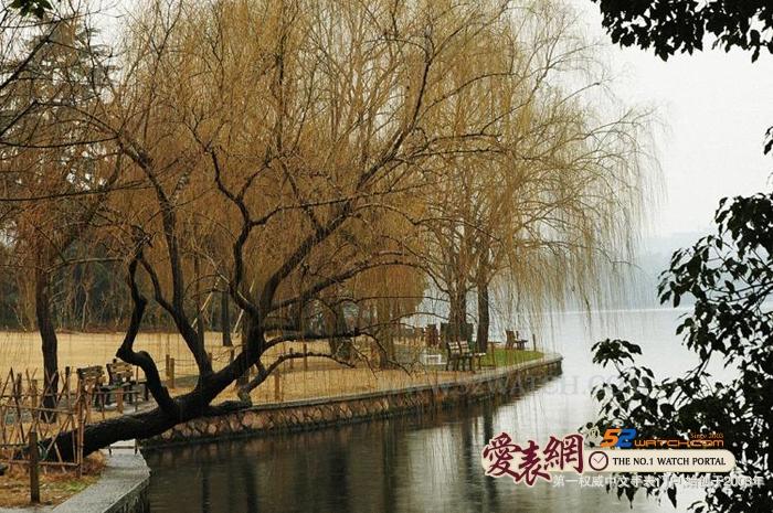 四月杭州西湖柳叶情