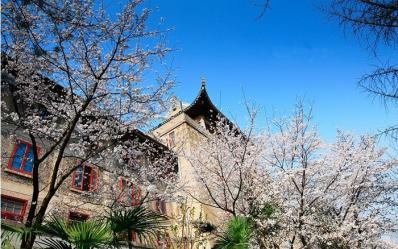 寻找春天---武汉樱花灿烂的校园