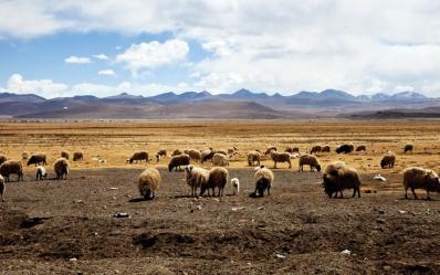 奇妙美丽的原野——哲古措游记